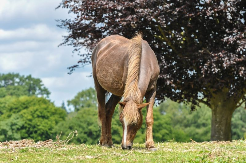 Ponies in the New Forest - a day trip from London
