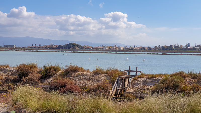 Flamingo park in Cagliari