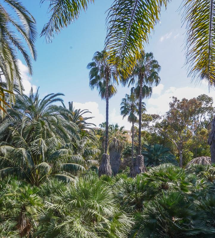 lush surroundings at the botanical garden