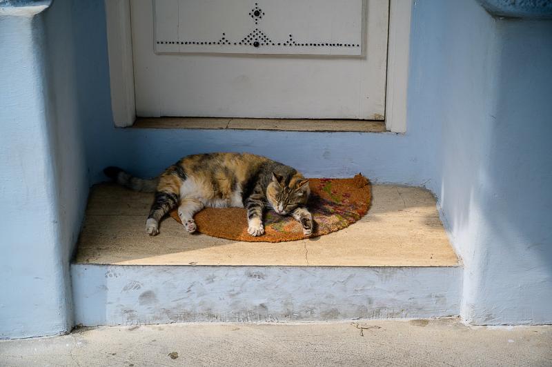 Cat naps in Ischia