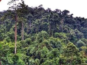 Rainforest in Mengla County (勐腊县 - Mengla Xian)
