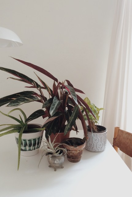 Aloe, calathea, tillandsia, ludisia, the one on the right.....I forgot its name.