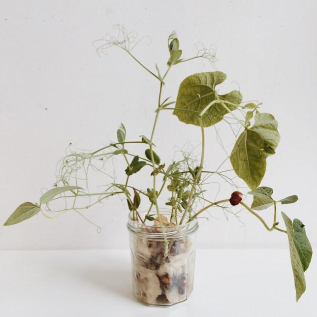 Urbanjunglebloggers: plants and glass.