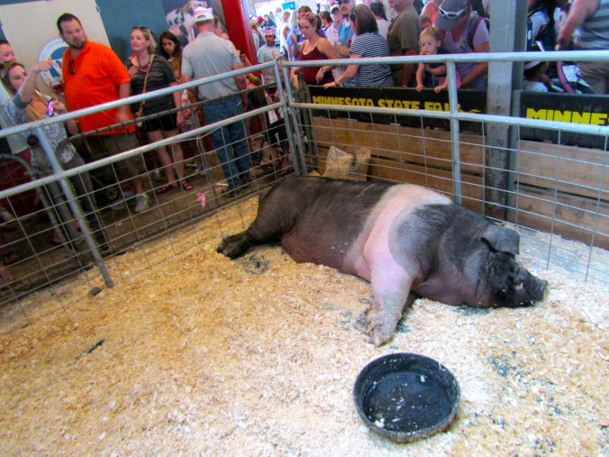 biggest-pig-minnesota-state-fair.jpg