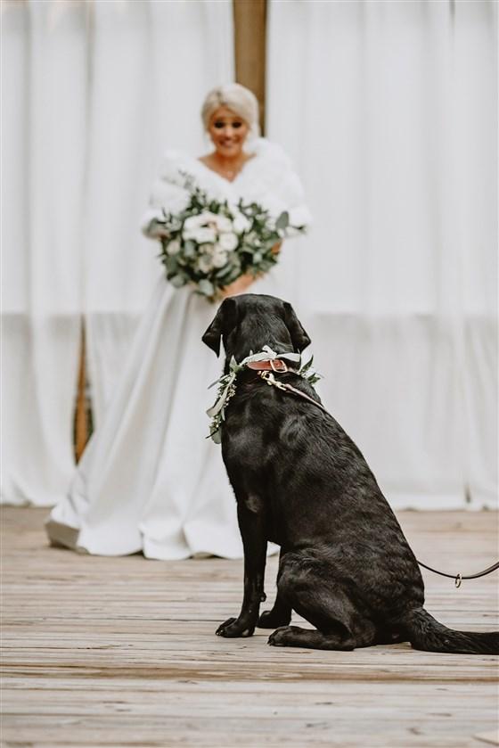 Cachorrinho Zeke dando o primeiro olhar para a noiva