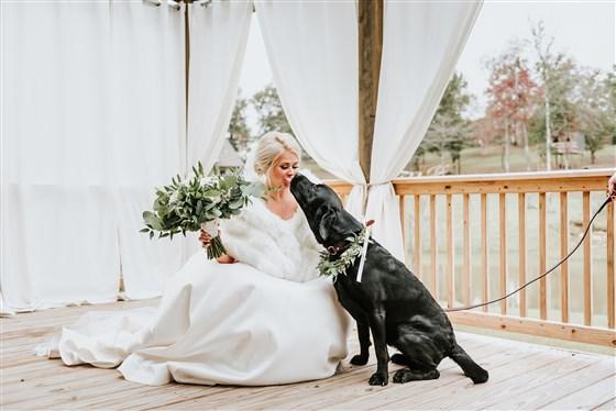 Cachorrinho Zeke demonstrando seu carinho para a noiva dando uma lambidinha