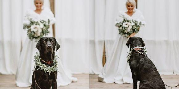 Imagem de capa mostrando a reação do cachorro Zeke ao encontrar sua dona vestida de noiva pela primeira vez
