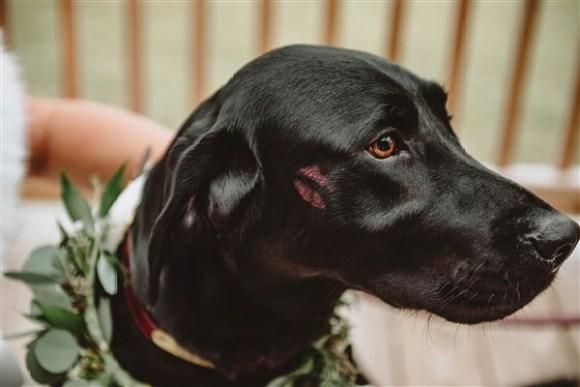 cachorro Zeke com uma marca de beijo da noiva
