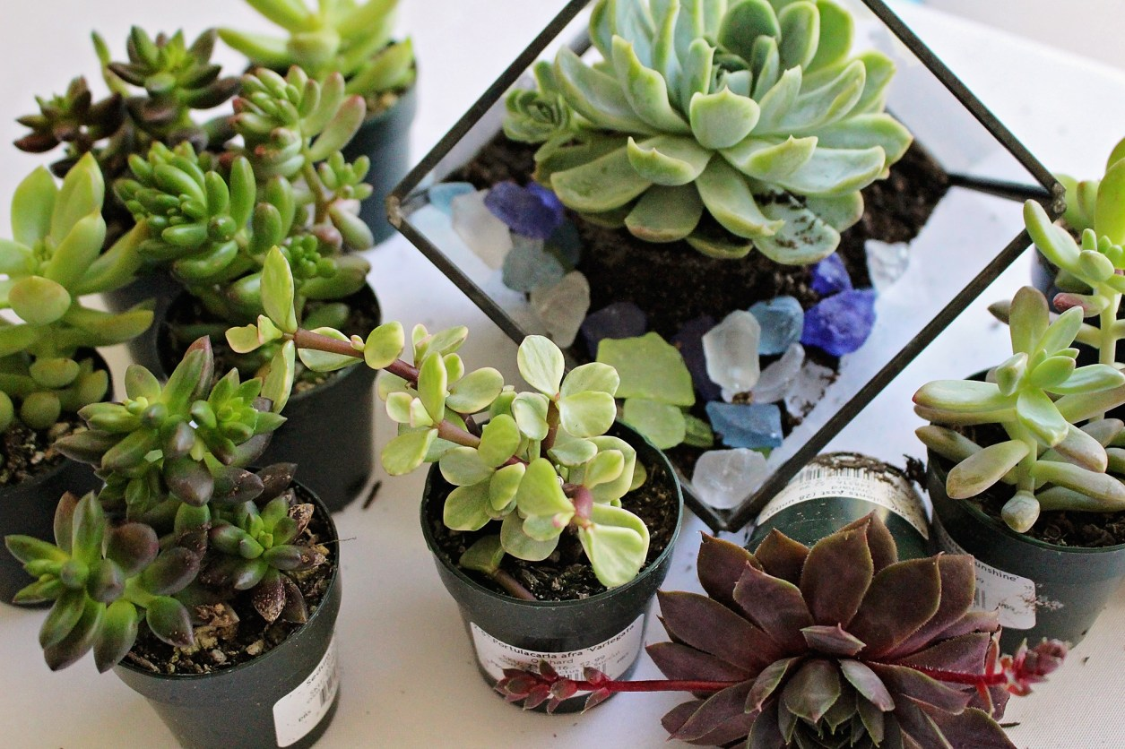 DIY Terrarium Party Favors | A Well Crafted Party