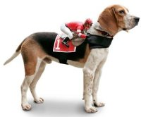 Jockey Rider Pet Costume