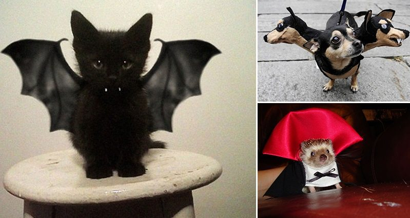Images Of Cute Candy Wallpaper Awesome Halloween Costumes For Pets