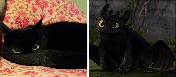 20 Cats That Freakishly Resemble Other Things