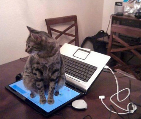 Cute Cat Computer Wallpaper 19 Hilarious Examples Of Cat Logic