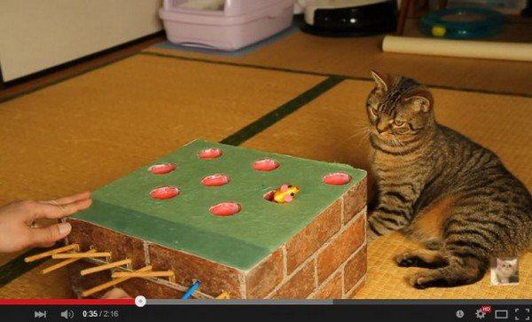 This Cat Owner Built An Awesome WhackAMole Game For