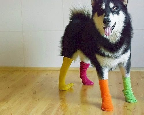 Who Said Sock It Me