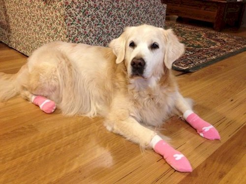 14 Cute SockWearing Dogs Youll Want To Hug