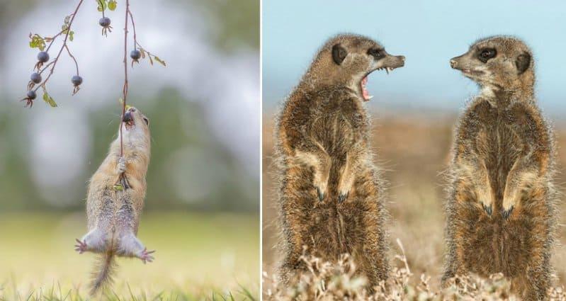 Funny Animals Make Us Laugh