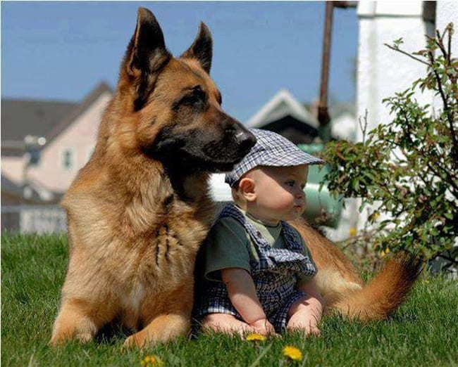 dog-and-baby-looking-at-the-same-direction-adorable-photos