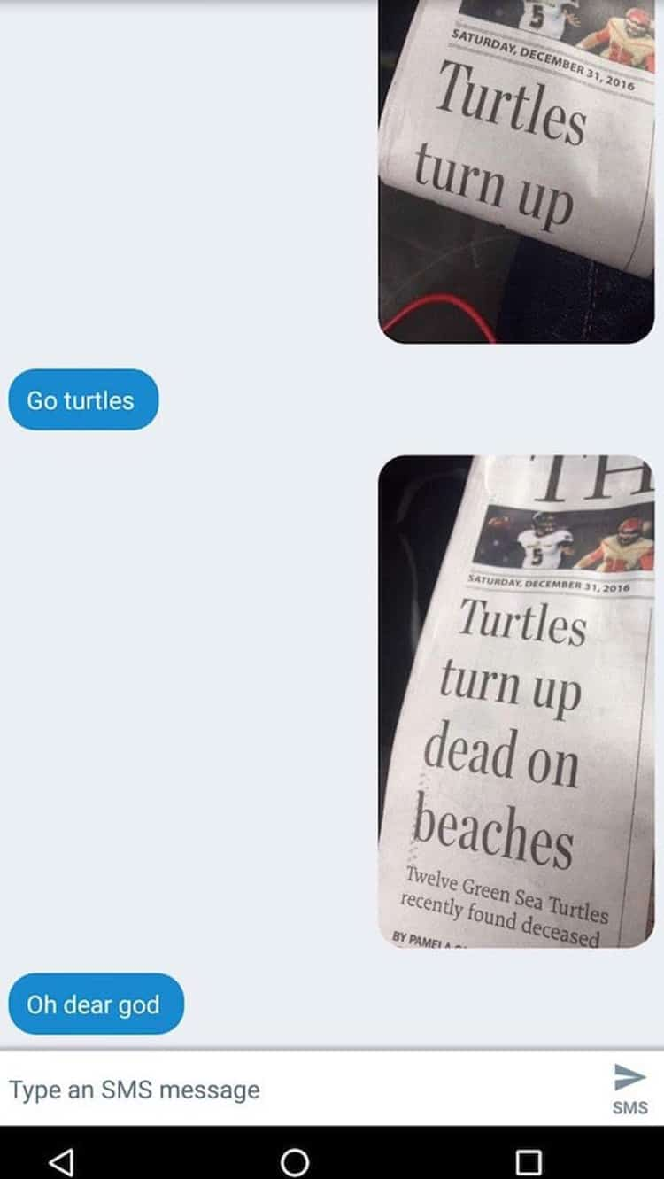 news-about-turtles-unforeseen-hilarity