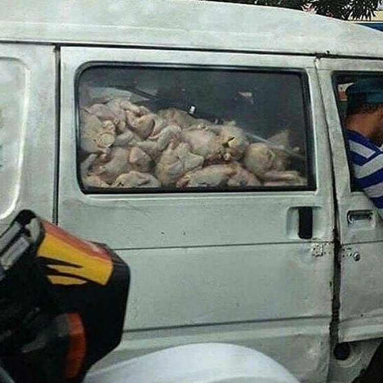 van-carrying-dressed-chickens-solid-proofs-generation-fails