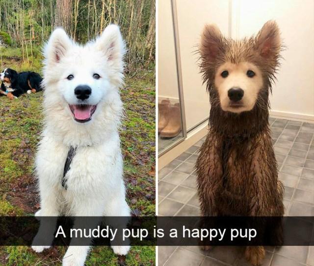 funny dog snapchats muddy pup