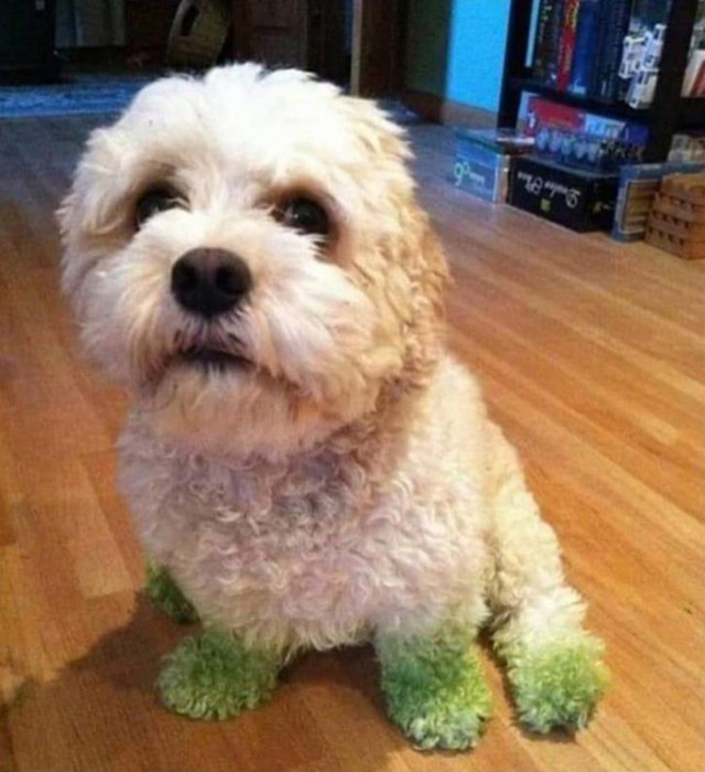 hilarious pet photos green paws