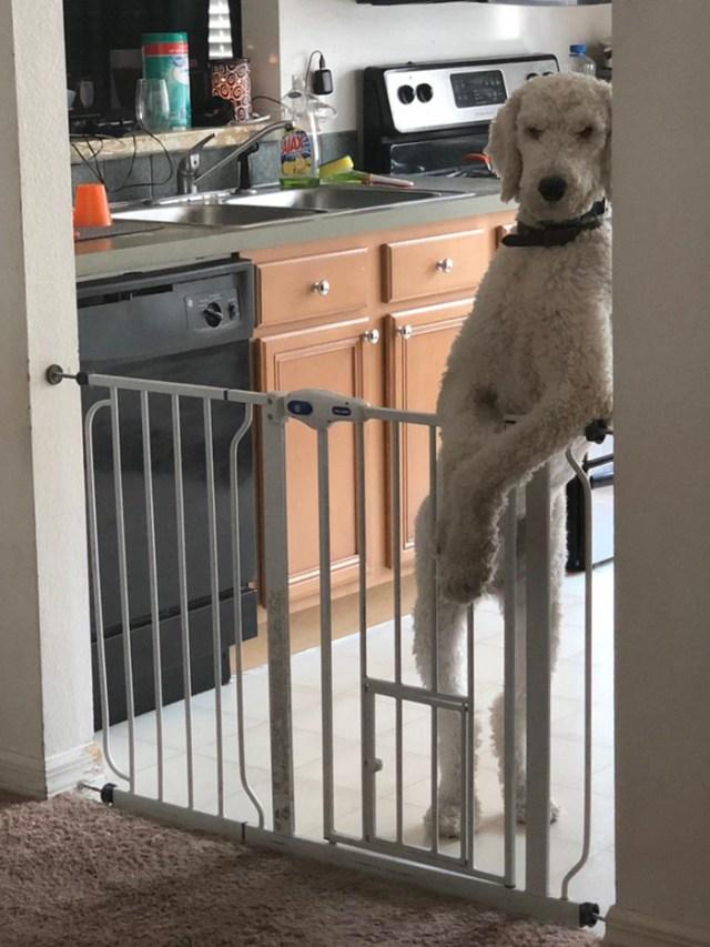 hilarious pet photos judging people