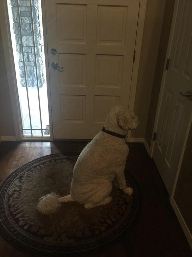 hilarious pet photos wrong door