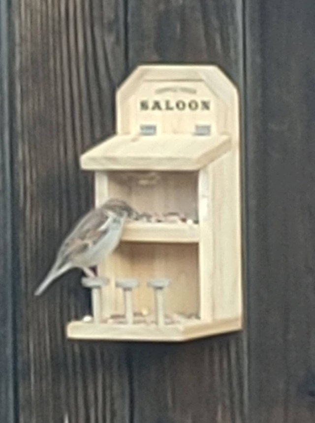 a2zwoodenletters outdoor bird feeder