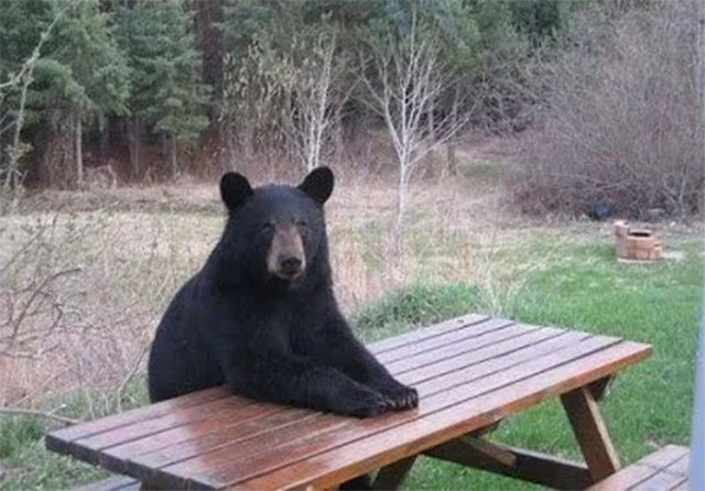 bear sitting on park bench