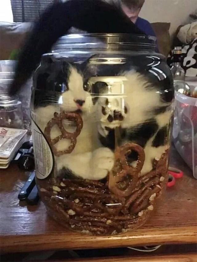 cat stuck in pretzel jar