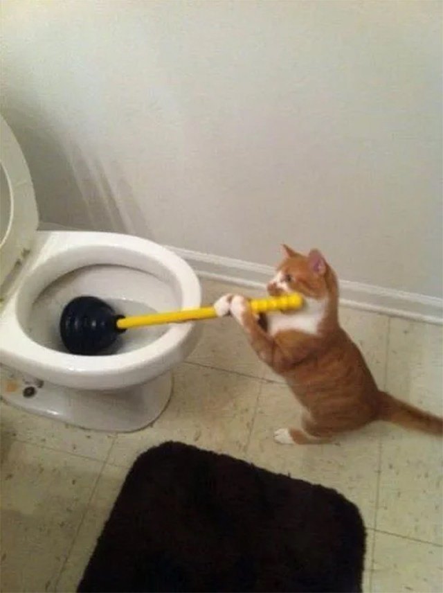 funny animals kitten plumbing toilet