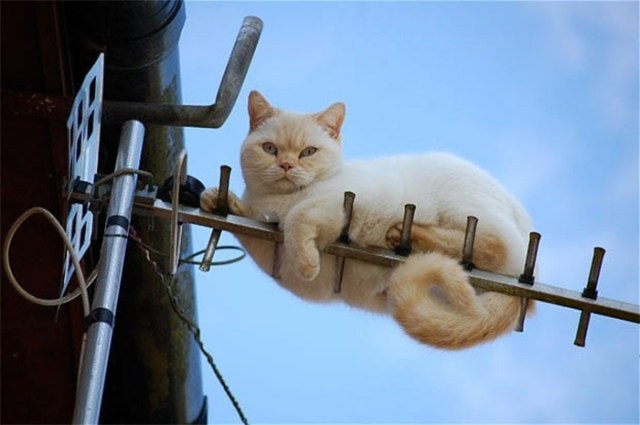 funny animals repair cat stuck