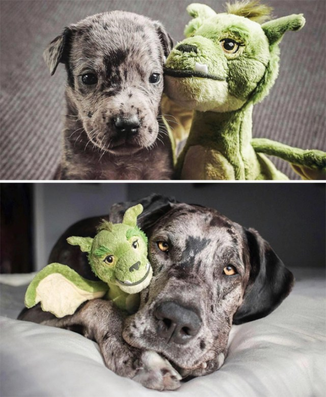pets with their favorite toys