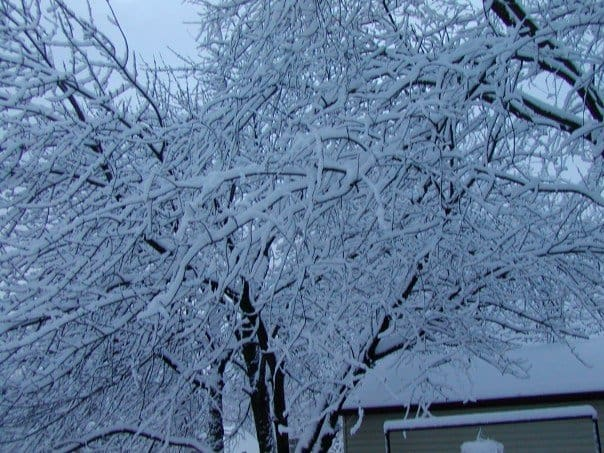 Surviving a Michigan Winter