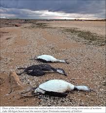 Avian Botulism