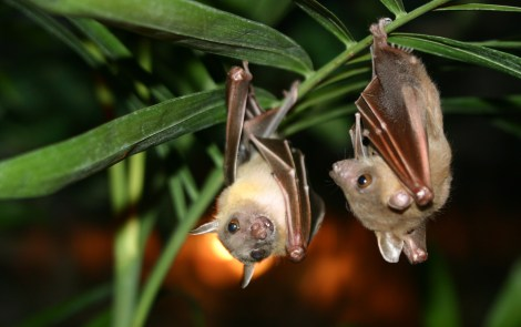 Get Kids Ready for Earth Day with Bat Zone Tour
