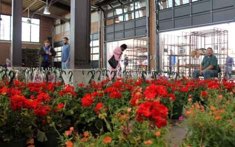 Flower Day Brings Spring To Detroit's Eastern Market