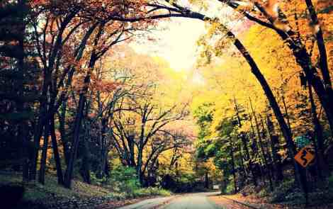 Kalamazoo's Fall Color Tour: 4 Roads You Can't Miss