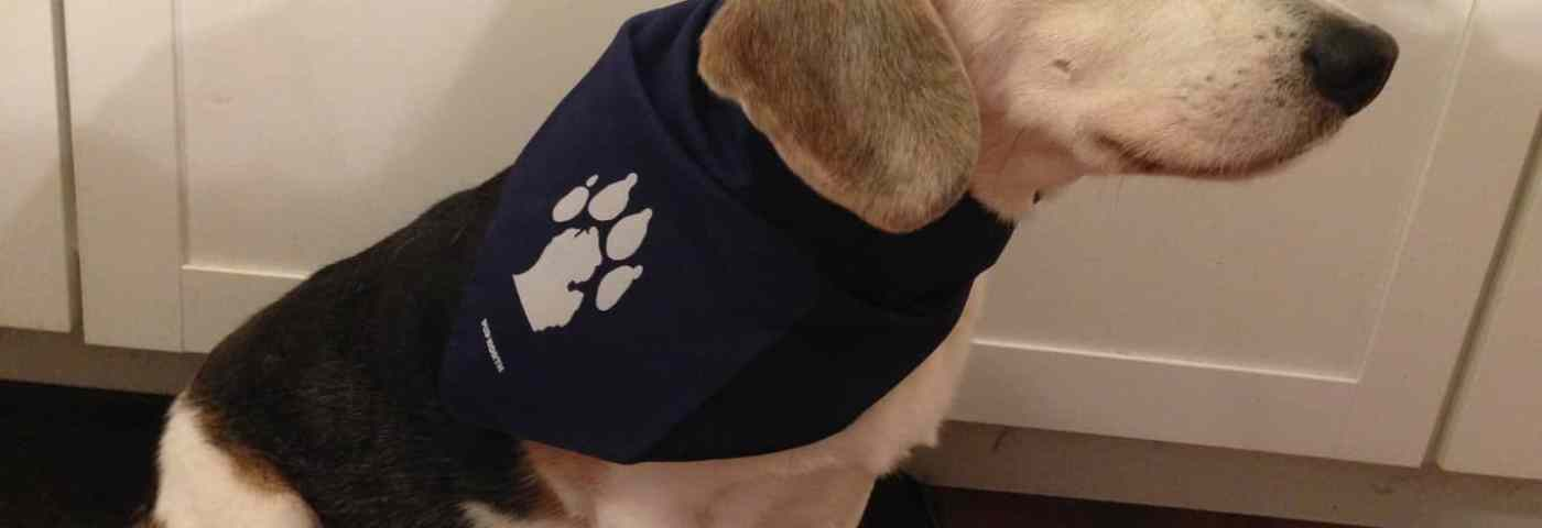 Pup North: Give the Gift of Pet Swag