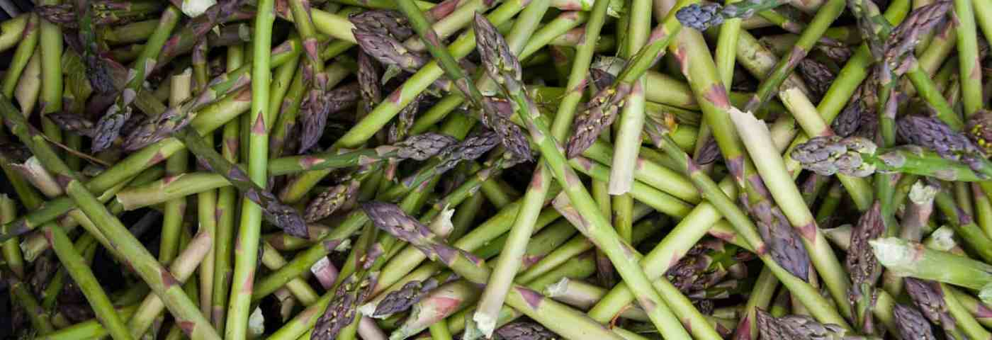 Michigan Asparagus Recipes