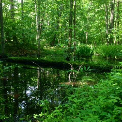 A Little Bit Of West Michigan In Metro Detroit: Bald Mountain State Recreation Area
