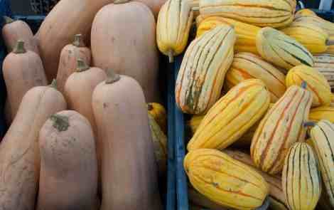 Here's How to Eat Michigan Squash this Fall