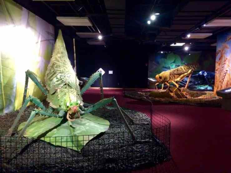 """A Bug's Life"" at Sloan Museum. Photo courtesy of Joanna Dueweke."
