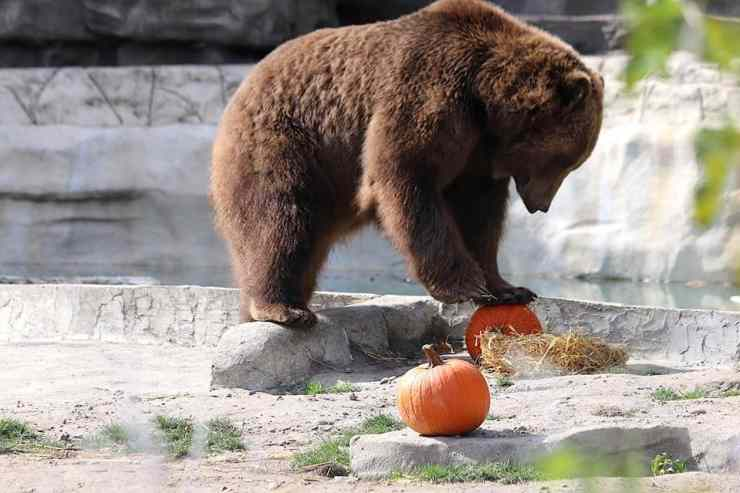 11 Michigan Events to Fall into October - The Awesome Mitten