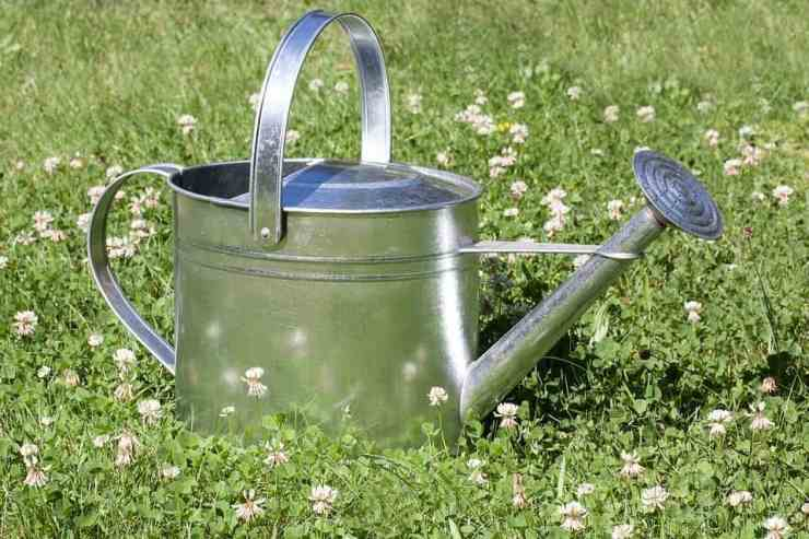 Your Quick Guide On How To Prepare A Garden For Spring - The Awesome Mitten