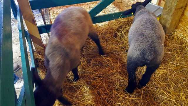 Vermontville Petting Zoo, family fun - The Awesome Mitten