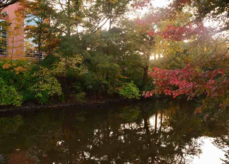 3 Areas You Must View Autumn Colors On Michigan State's Campus