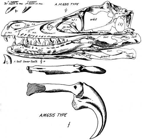 Velociraptor Claw Diagram
