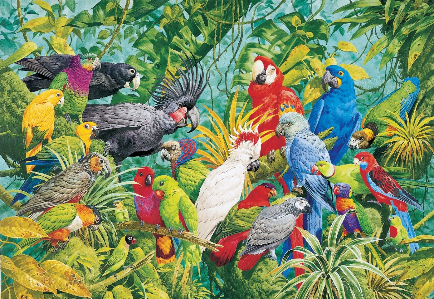 Colorful Birds of a Rainforest